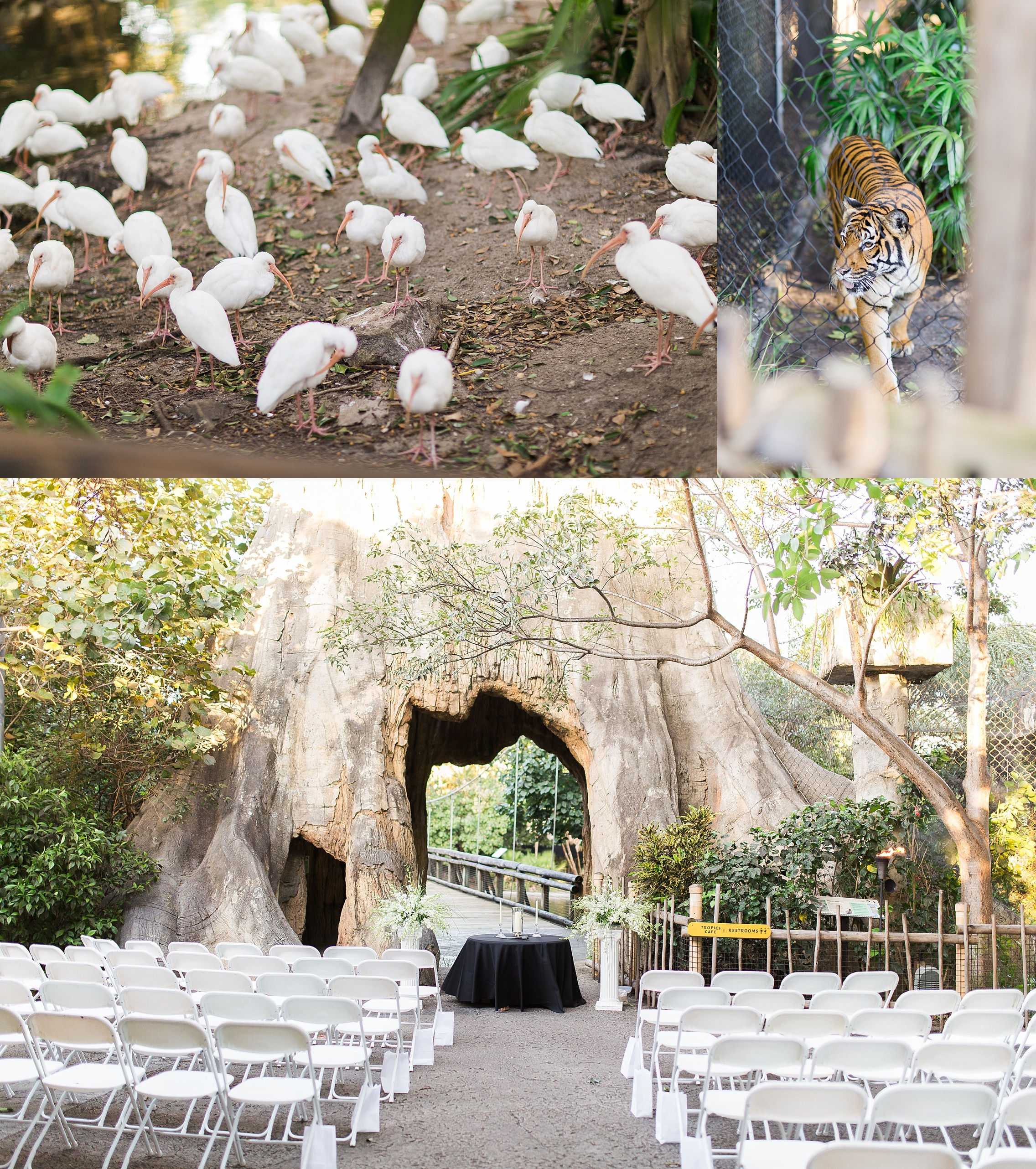 Palm Beach Zoo Wedding Photography_0001